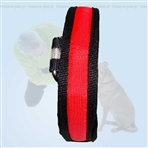 LED Red Collar XS